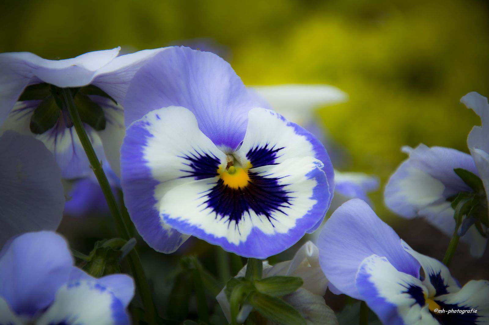 Blumen-DSC_4911-mh-photografie