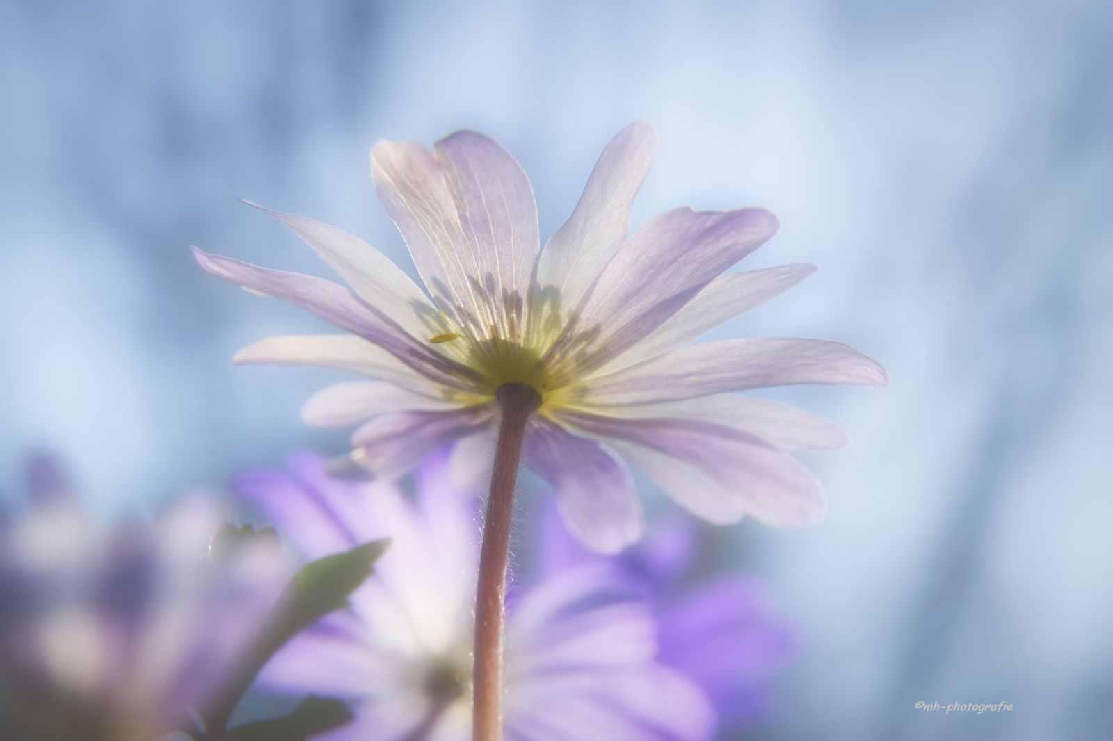 Blumen-DSC_4913-mh-photografie