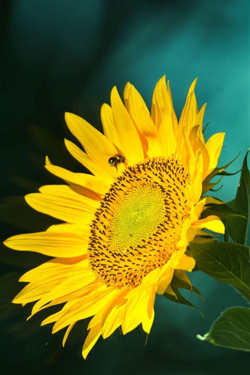 Blumen-DSC_4914-mh-photografie