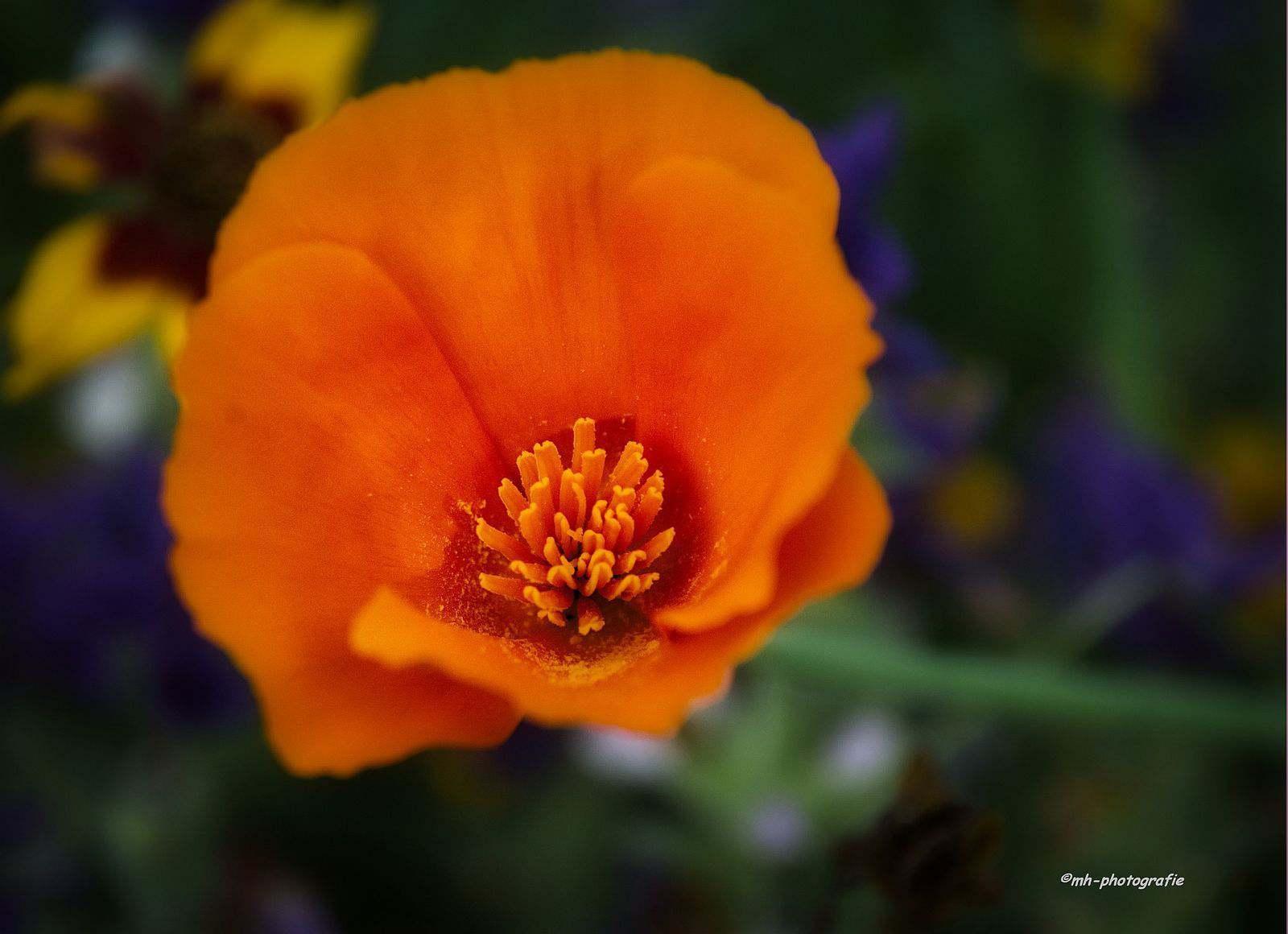 Blumen-DSC_4916-mh-photografie