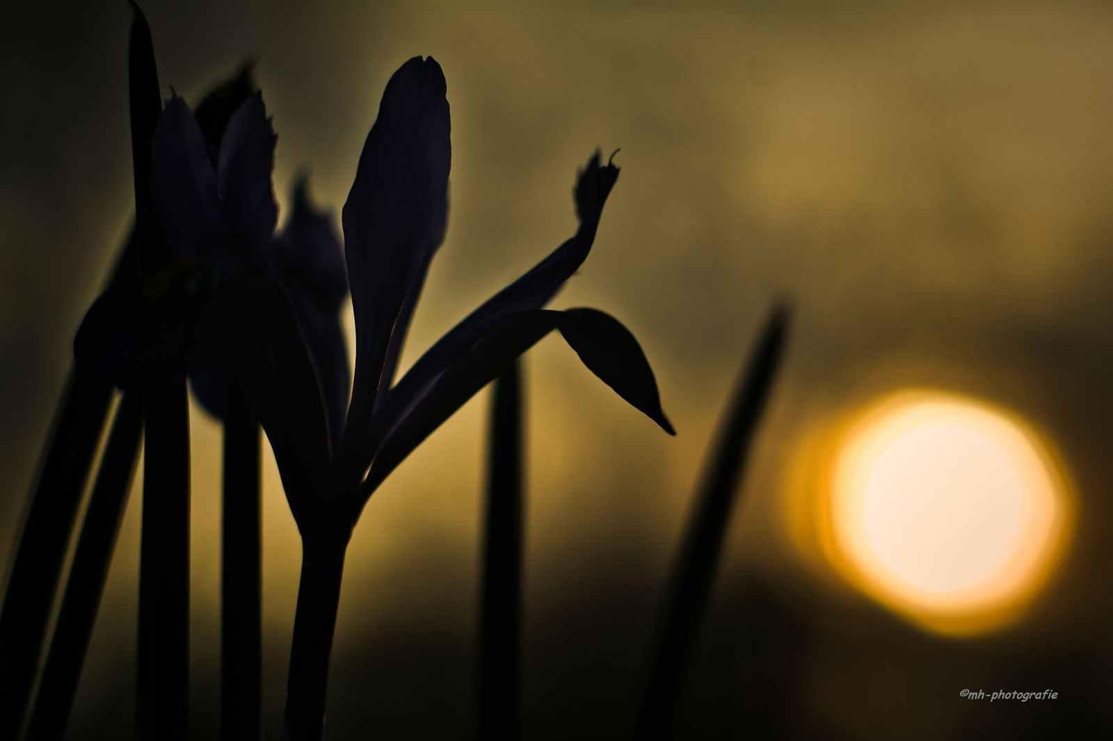 Blumen-DSC_4919-mh-photografie