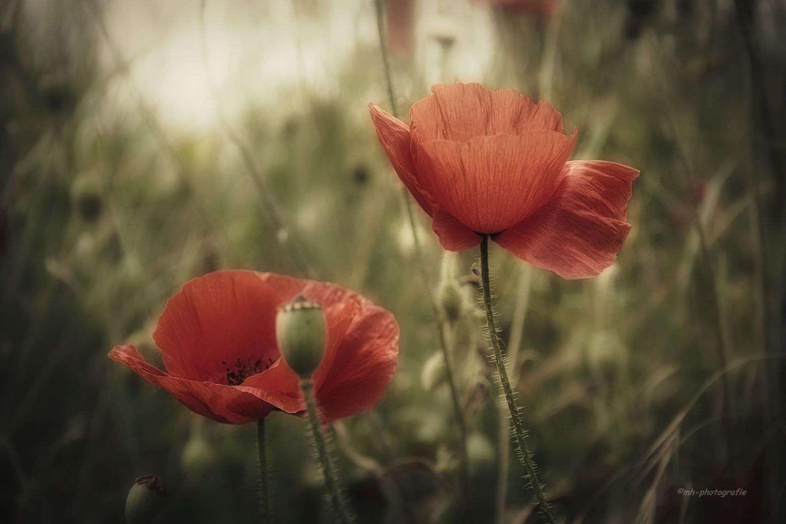 Blumen-DSC_4920-mh-photografie