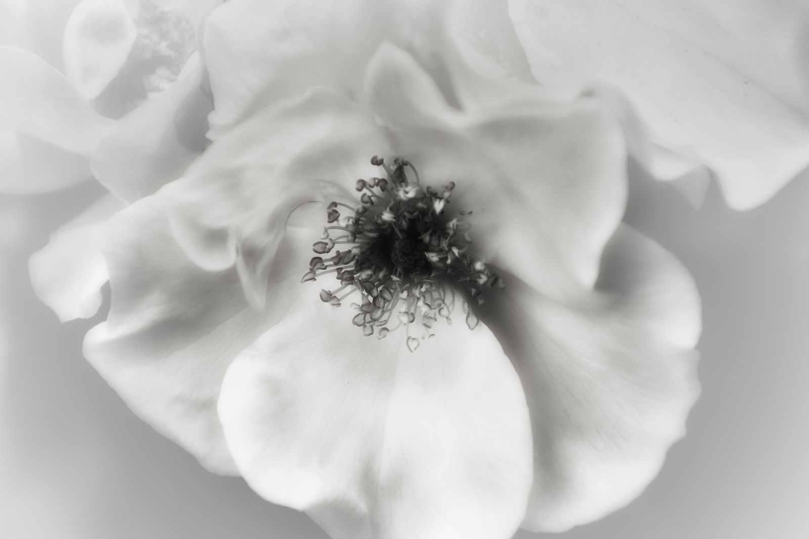 Blumen-DSC_4922-mh-photografie