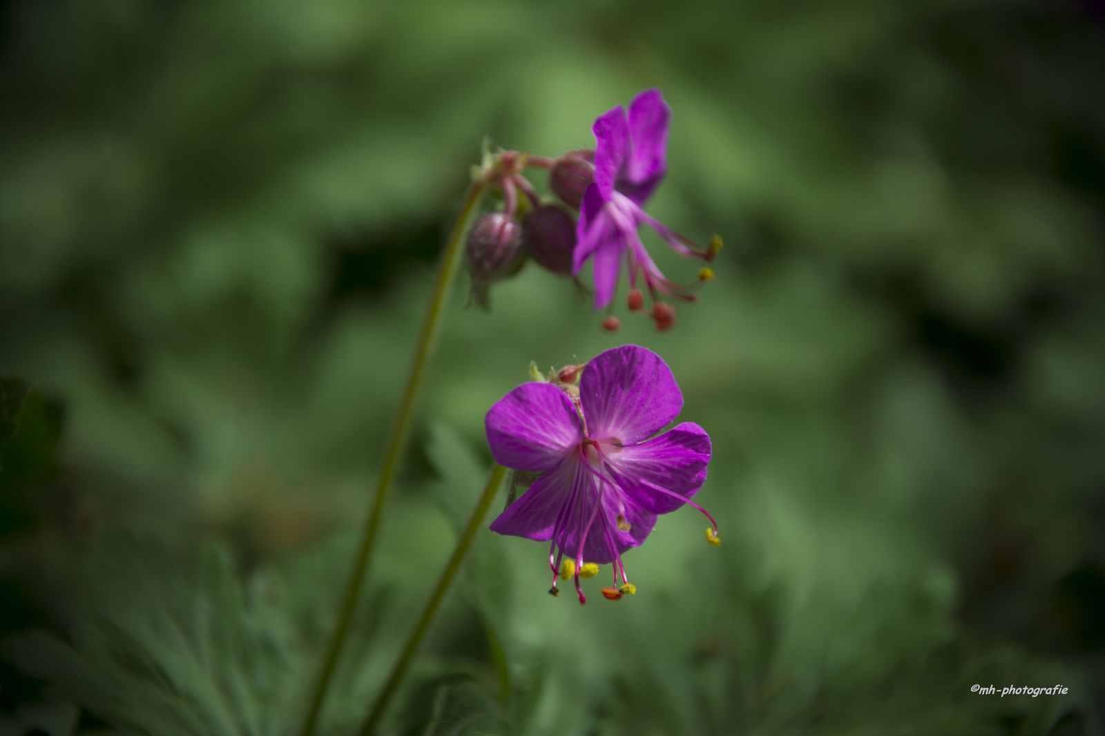 Blumen-DSC_4930-mh-photografie