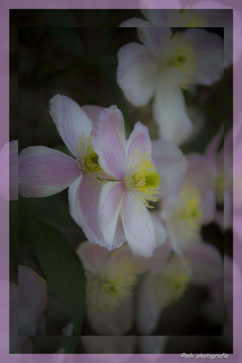 Blumen-DSC_4932-mh-photografie