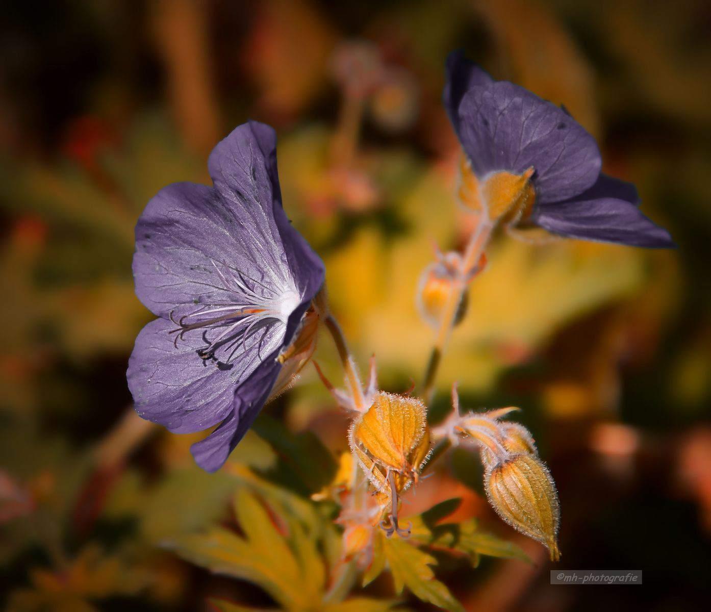 Blumen-DSC_4937-mh-photografie
