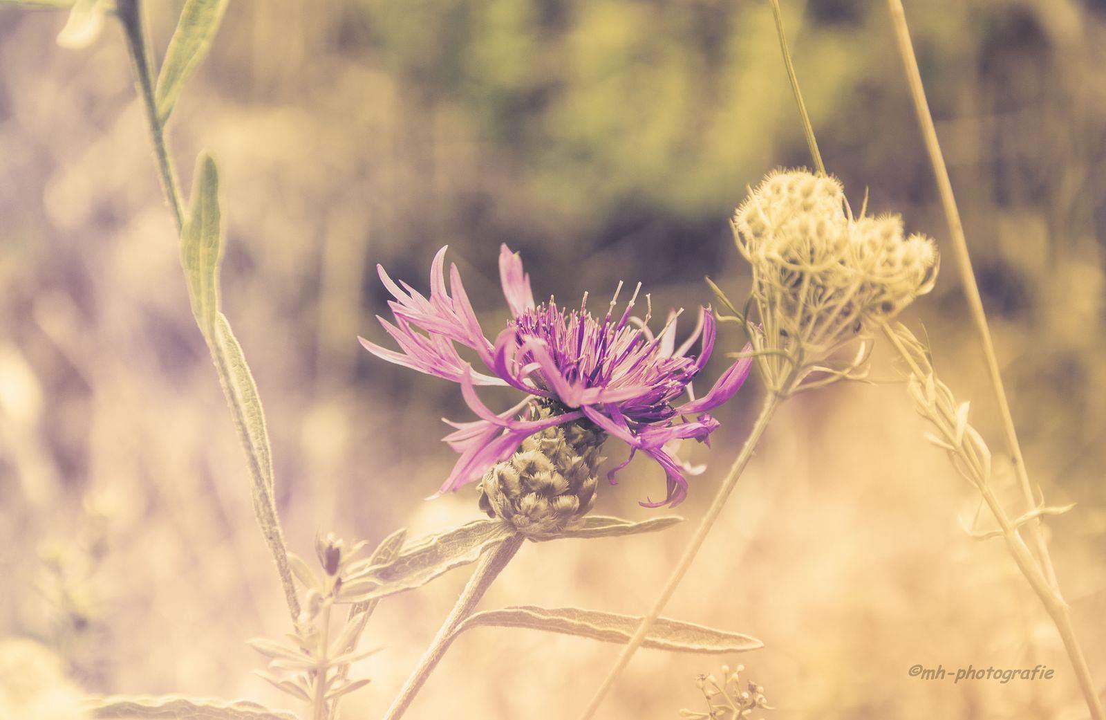 Blumen-DSC_4938-mh-photografie