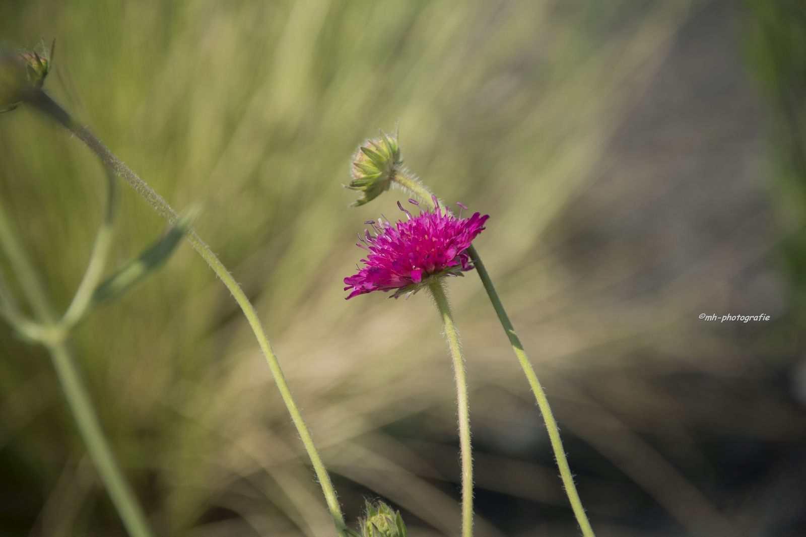 Blumen-DSC_4940-mh-photografie