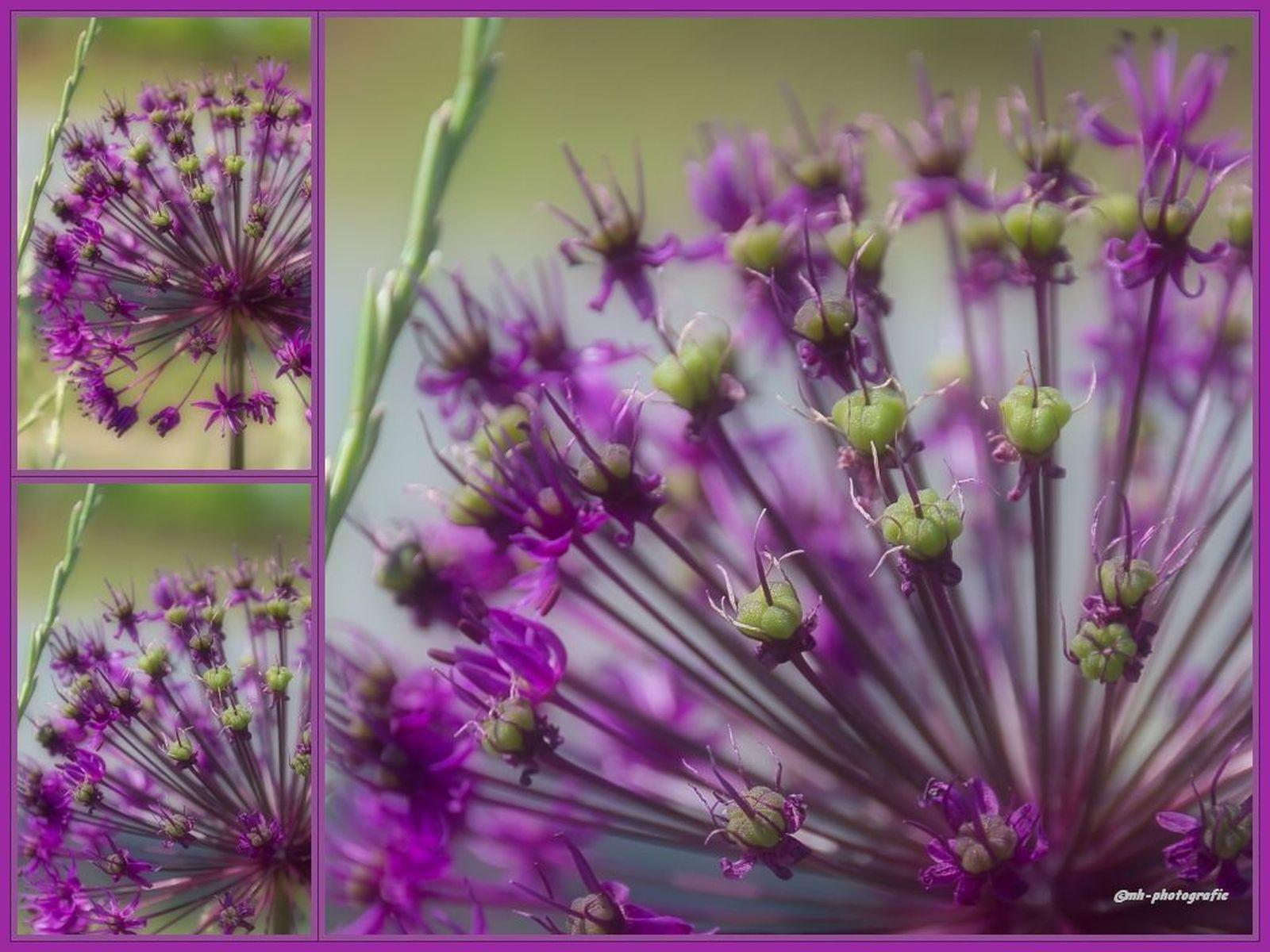 Blumen-DSC_4941-mh-photografie