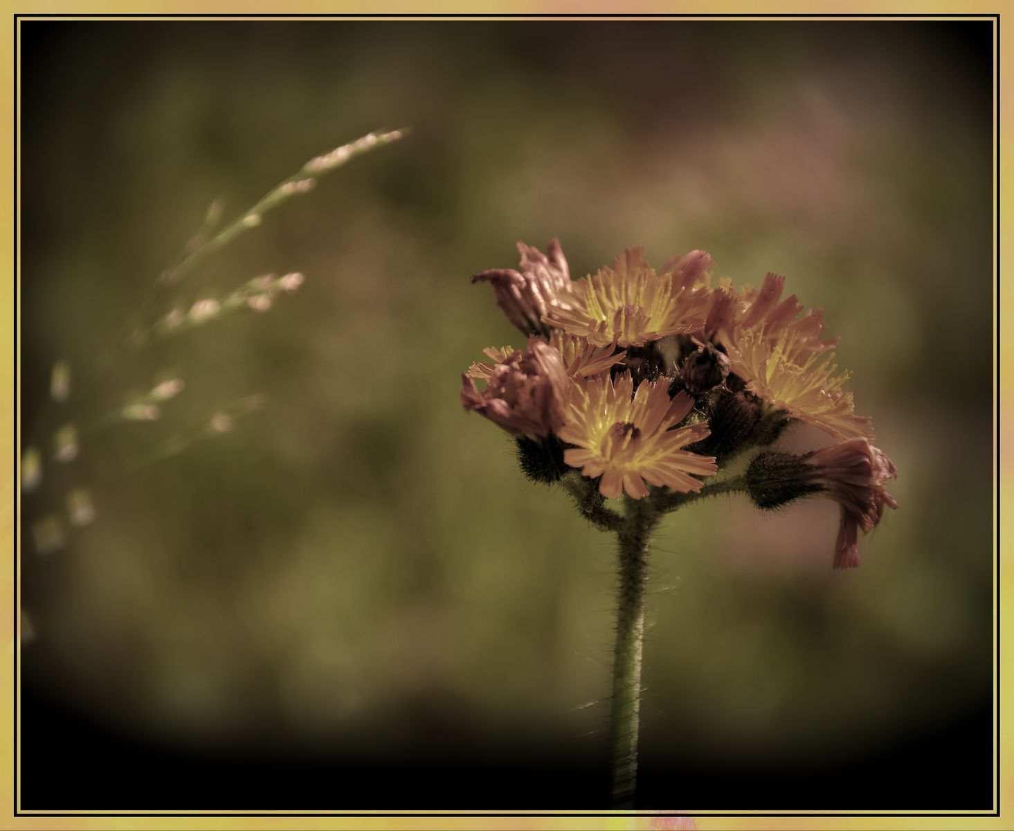 Blumen-DSC_4942-mh-photografie