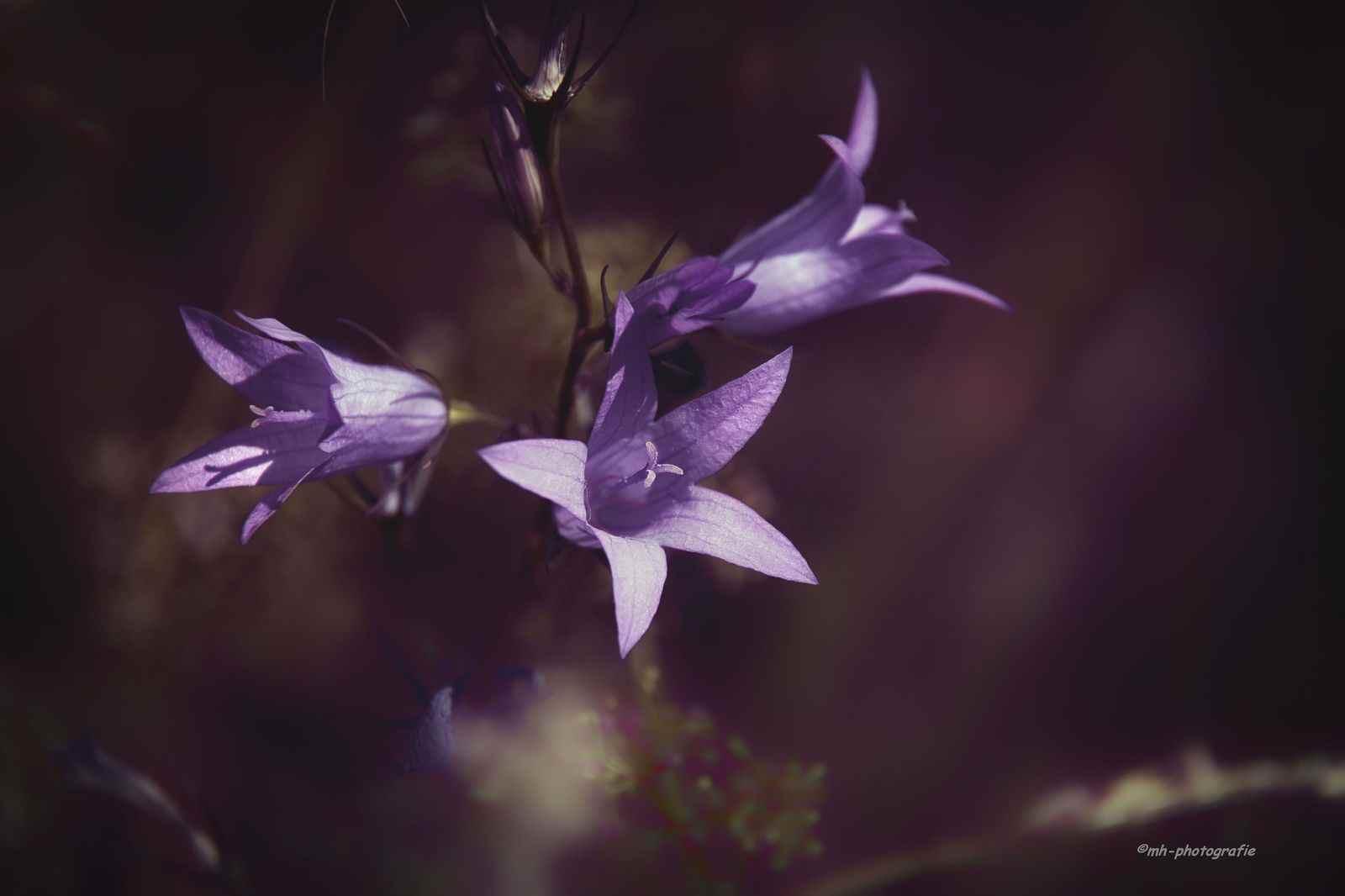 Blumen-DSC_4943-mh-photografie