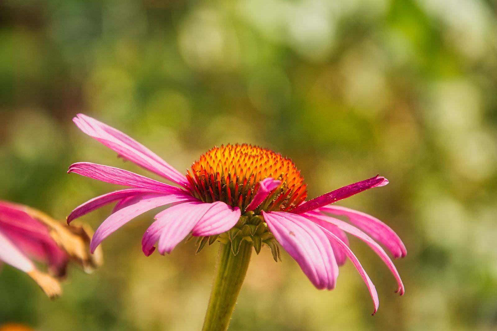 Blumen-DSC_4944-mh-photografie