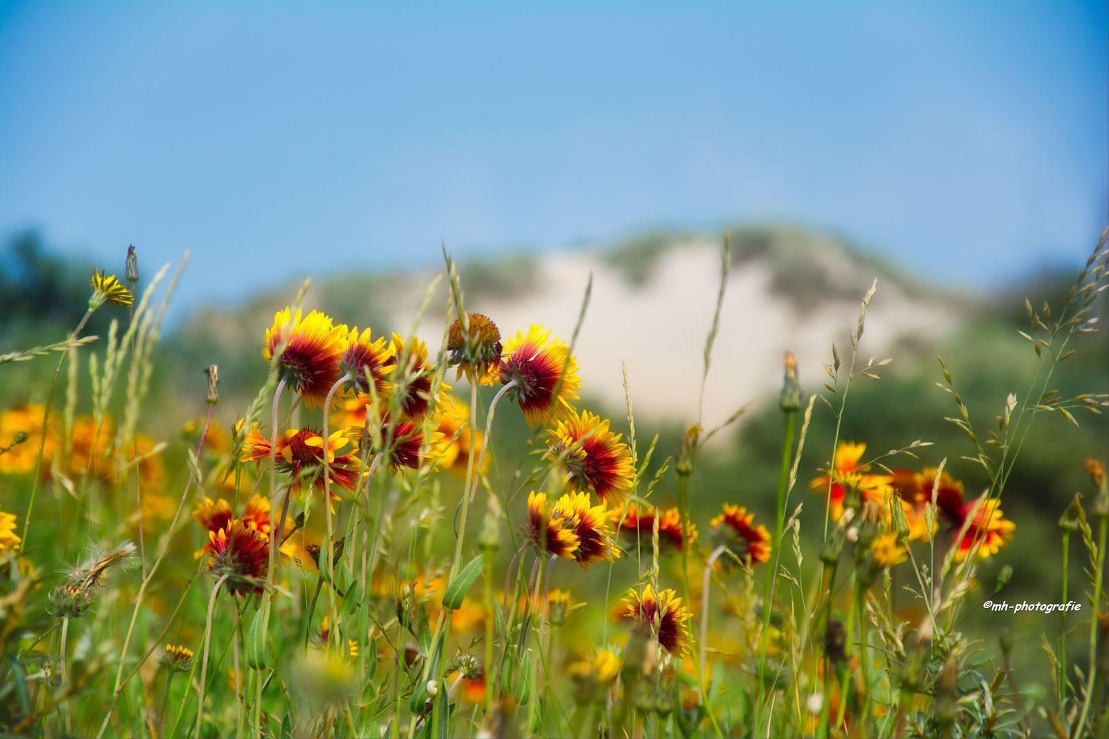 Blumen-DSC_4950-mh-photografie