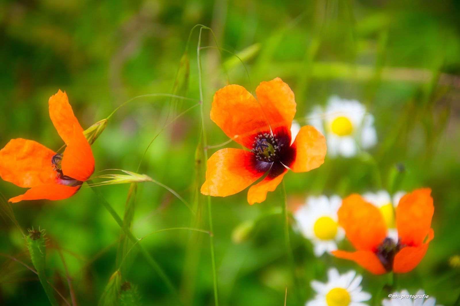 Blumen-DSC_4956-mh-photografie