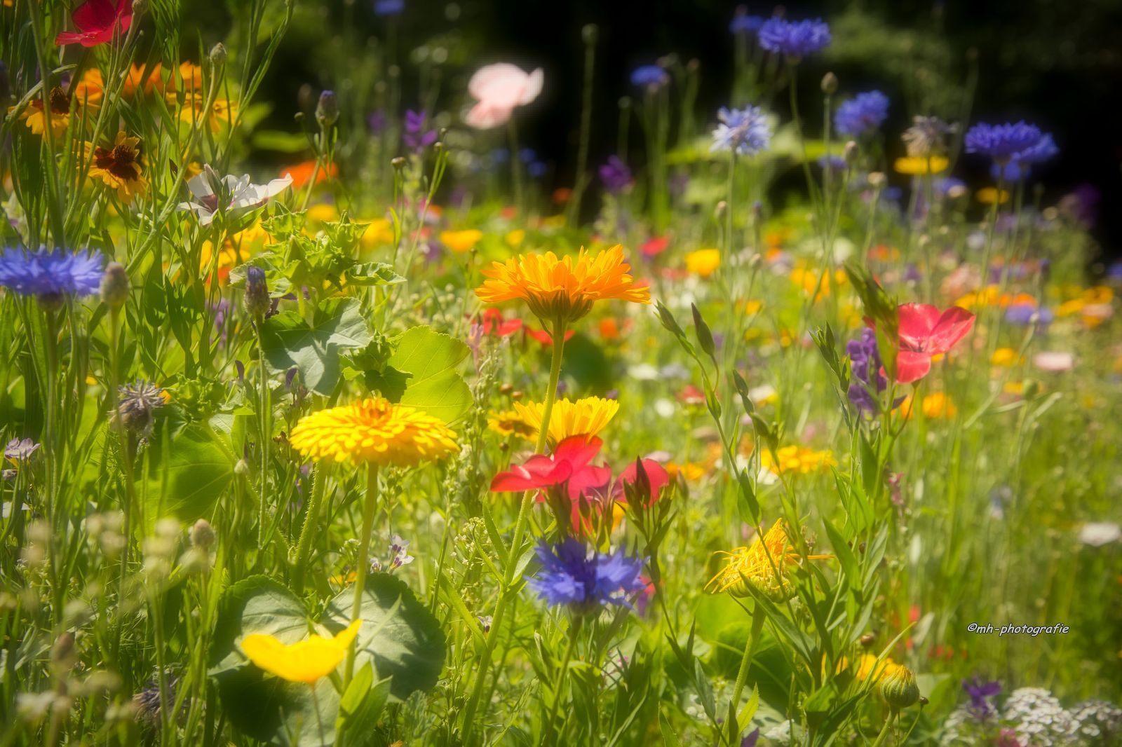 Blumen-DSC_4962-mh-photografie