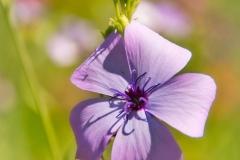 Blumen-DSC_4909-mh-photografie