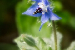 Blumen-DSC_4910-mh-photografie