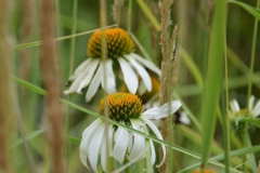 Blumen-DSC_4912-mh-photografie