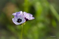Blumen-DSC_4915-mh-photografie