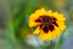 Blumen-DSC_4917-mh-photografie