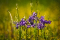 Blumen-DSC_4928-mh-photografie