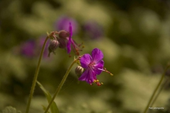 Blumen-DSC_4931-mh-photografie