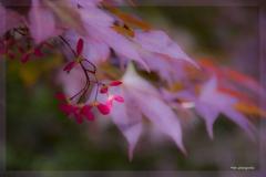 Blumen-DSC_4933-mh-photografie