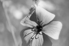 Blumen-DSC_4934-mh-photografie