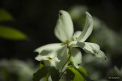 Blumen-DSC_4936-mh-photografie