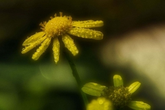 Blumen-DSC_4946-mh-photografie