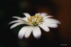 Blumen-DSC_4949-mh-photografie