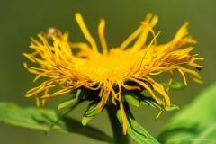 Blumen-DSC_4957-mh-photografie