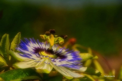Blumen-DSC_4958-mh-photografie