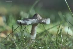 Pilze-DSC_0045