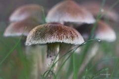 Pilze-DSC_0048