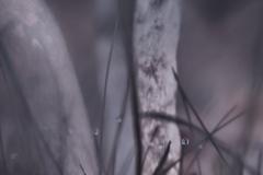 Pilze-DSC_0049