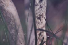 Pilze-DSC_0050