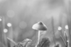 Pilze-DSC_0053