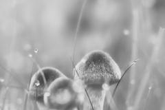 Pilze-DSC_0055