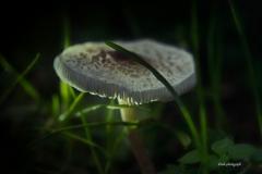 Pilze-DSC_0060