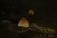 Pilze-DSC_0071