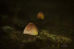 Pilze-DSC_0072