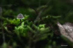 Pilze-DSC_0078