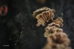 Pilze-DSC_0080
