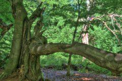 urwald-sababurg-mh-photografie-11