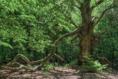 urwald-sababurg-mh-photografie-13