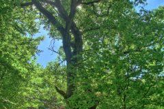 urwald-sababurg-mh-photografie-2