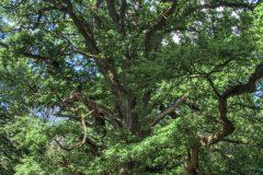 urwald-sababurg-mh-photografie-28