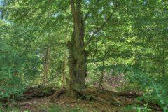 urwald-sababurg-mh-photografie-32