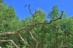 urwald-sababurg-mh-photografie-36
